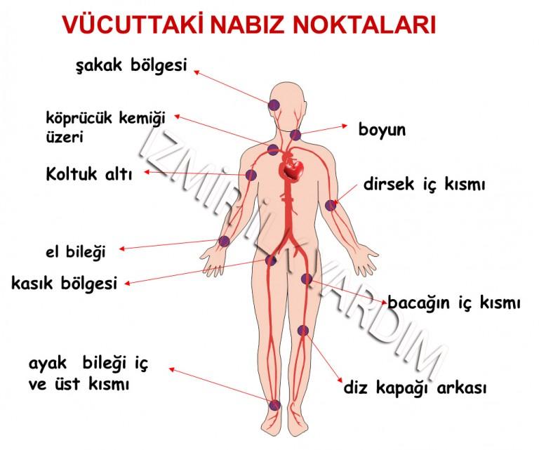 vücudun-nabız-noktaları